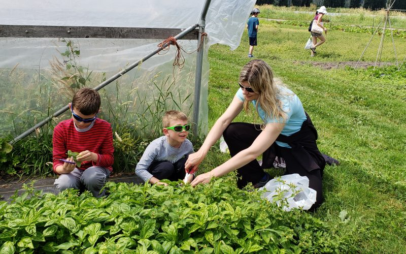 Mother and kids in basil, U-Pick Basil