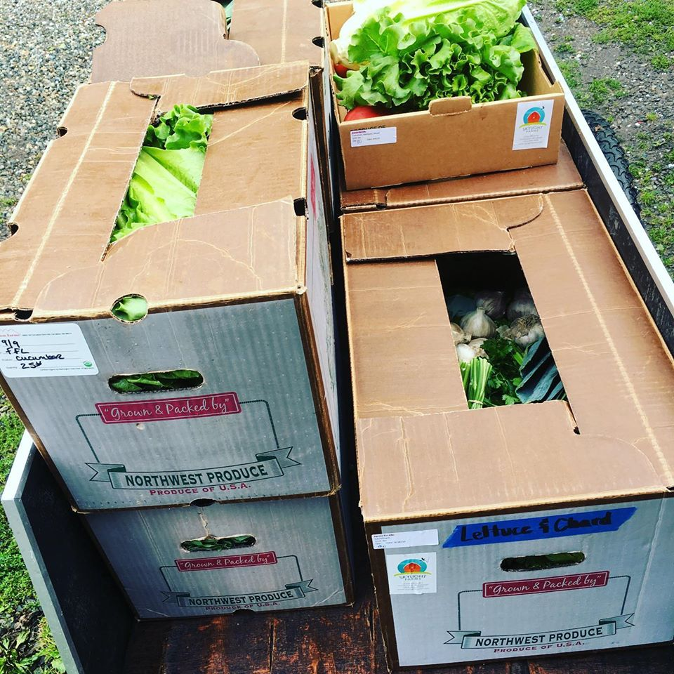 Box of fresh vegetables at Root Connection ready to donate