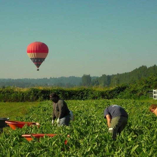 Sammamish Valley Farming with Hot Air Balloon